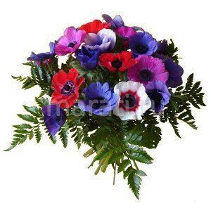 Доставка цветов спб в подарок